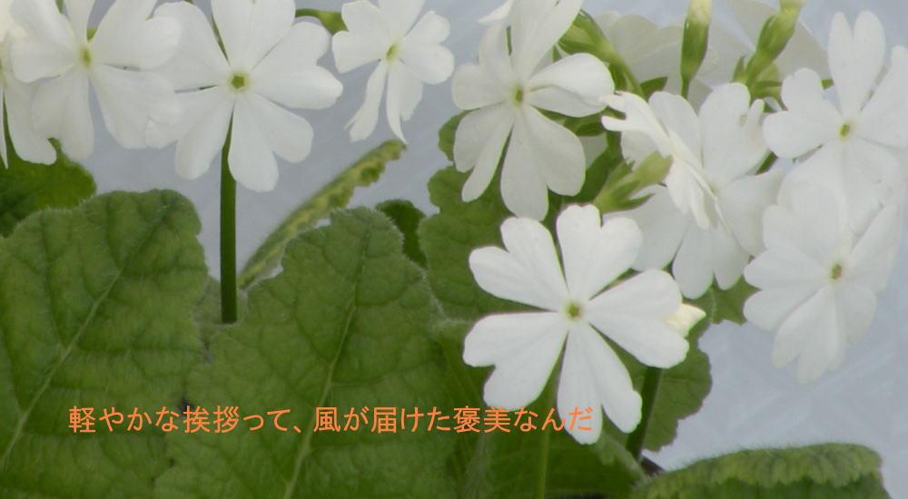 f0117041_1732838.jpg