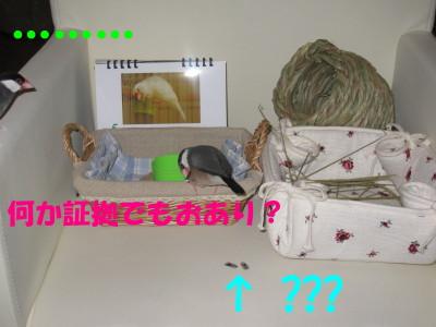 b0158061_2044211.jpg