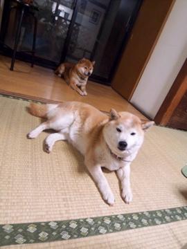 小岩の名店「阿波屋」と「丸幸」_c0180686_0404126.jpg