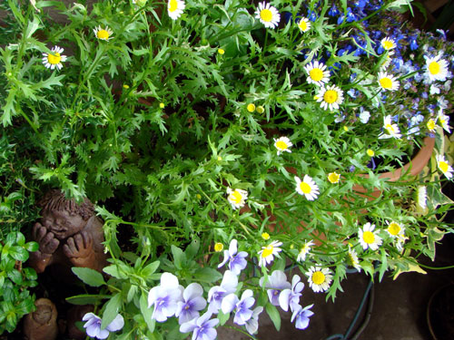 ここに咲く花~♪_a0047200_12562845.jpg
