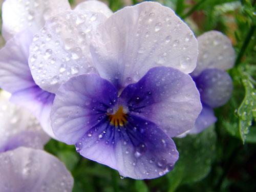 ここに咲く花~♪_a0047200_12571915.jpg