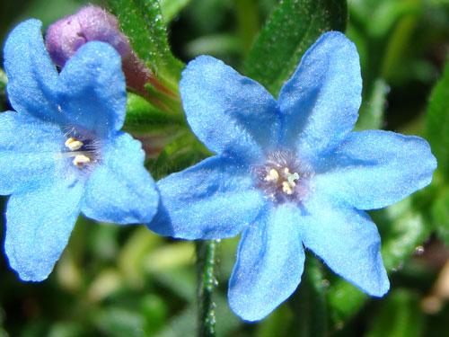 ここに咲く花~♪_a0047200_12581512.jpg