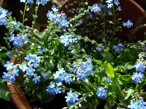 ここに咲く花~♪_a0047200_12584339.jpg