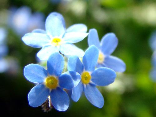 ここに咲く花~♪_a0047200_12585711.jpg
