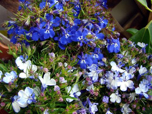 ここに咲く花~♪_a0047200_12595017.jpg