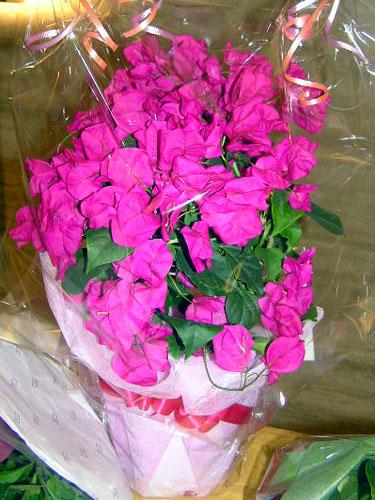 ここに咲く花~♪_a0047200_135233.jpg