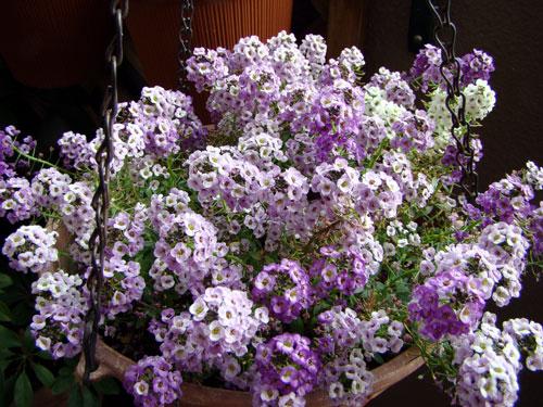 ここに咲く花~♪_a0047200_20161019.jpg