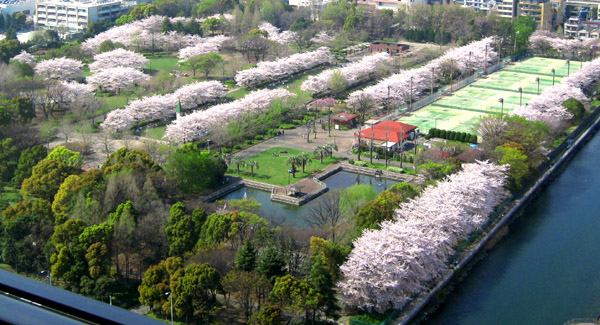 桜Ⅵ_b0083801_1913358.jpg