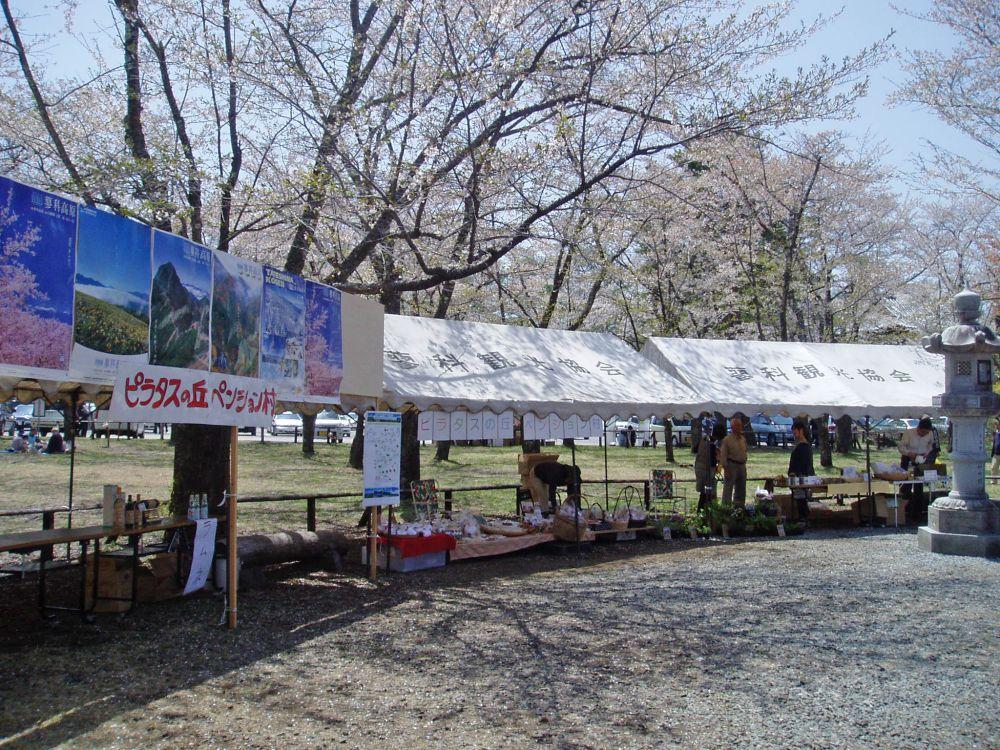 桜まつり Ⅱ_d0102327_13143561.jpg
