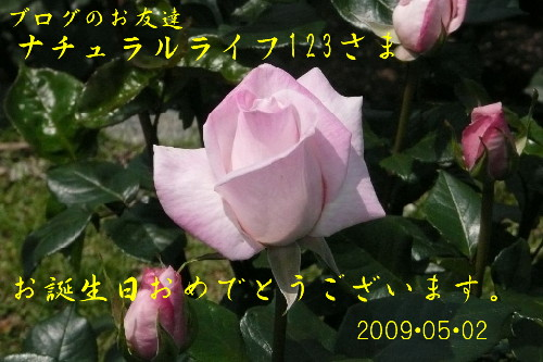 e0033229_0163168.jpg
