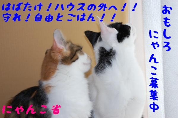 c0181639_156151.jpg