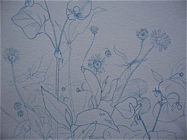 GWお絵描きシリーズ〜庭で絵を描こう①_d0101846_5533272.jpg