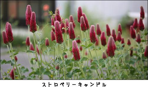 b0066947_154863.jpg