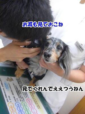 d0020869_2533312.jpg