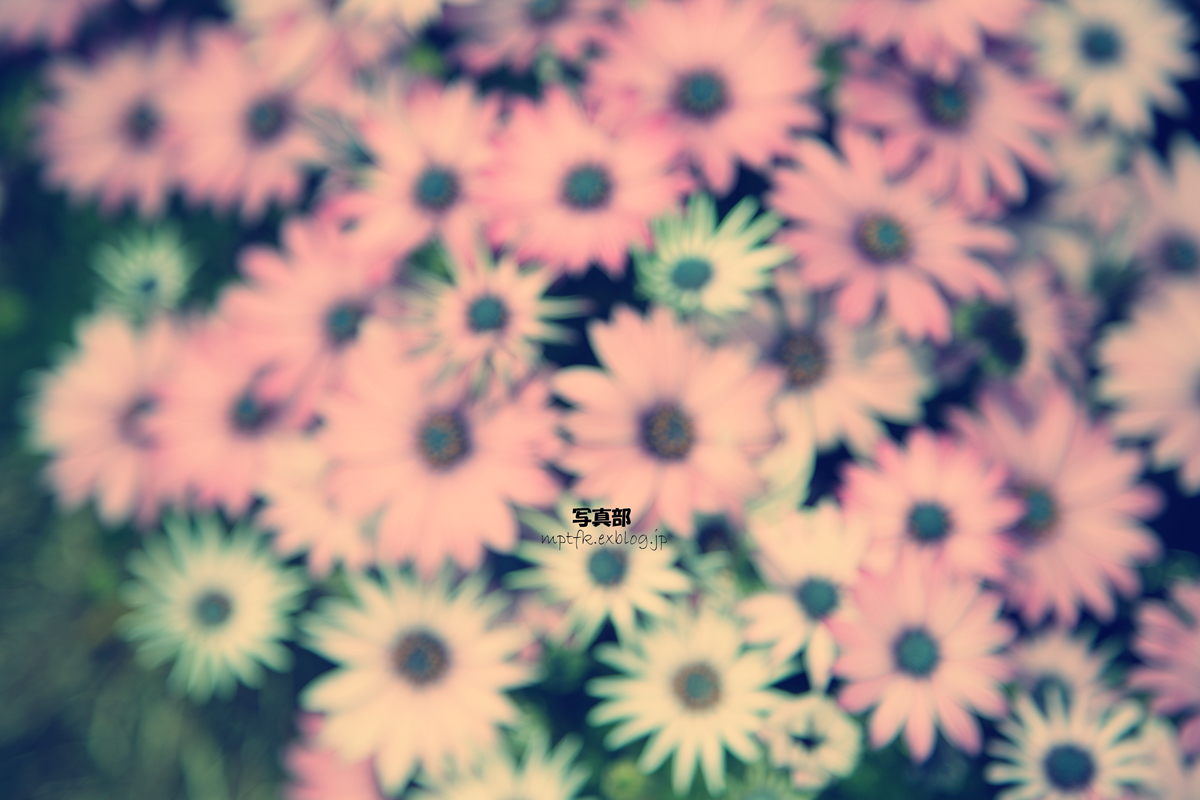 flowers_f0021869_10313752.jpg
