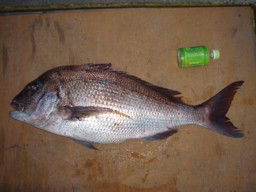 鯛、タイ、鯛_a0077071_1930402.jpg