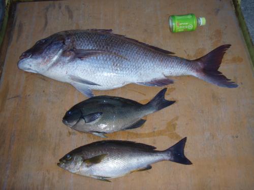 鯛、タイ、鯛_a0077071_19322853.jpg