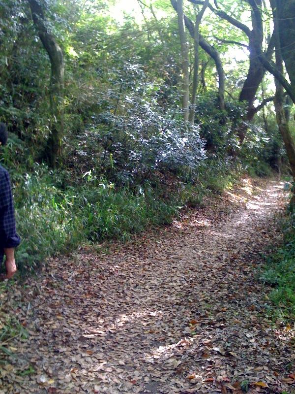 5/2(土)晴れ 六甲山を歩く_f0072976_8441537.jpg