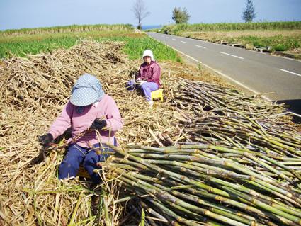 さとうきびの収穫と黒糖ができるまで_c0165185_17335937.jpg