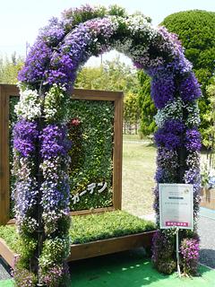 浜松で花だらけ_c0053520_23382746.jpg