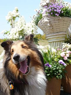 浜松で花だらけ_c0053520_23573389.jpg
