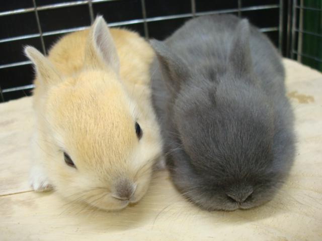 ウサギ・インコ_f0189122_93255.jpg