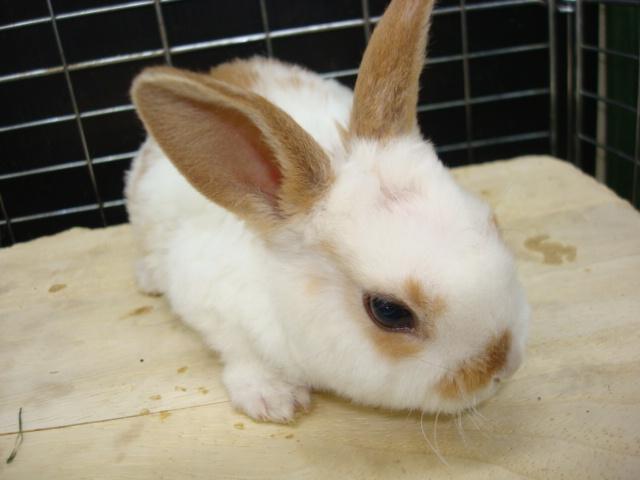 ウサギ・インコ_f0189122_9332663.jpg