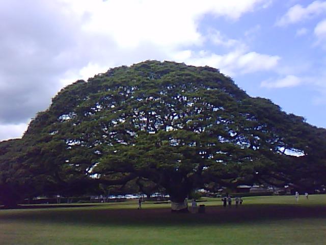 ハワイ旅行....リムジンで島内一周観光_b0137932_11305356.jpg
