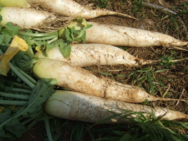 夏野菜...果実...の植え付け_b0137932_12565027.jpg