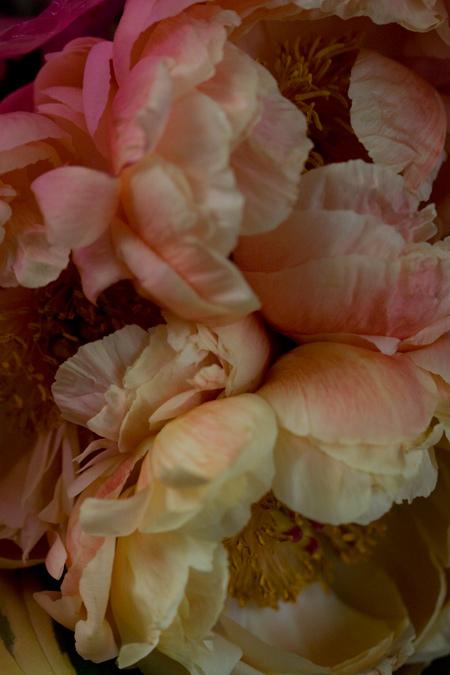 牡丹の花束_e0048332_21304538.jpg