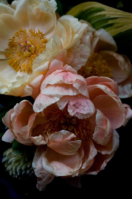 牡丹の花束_e0048332_21312040.jpg