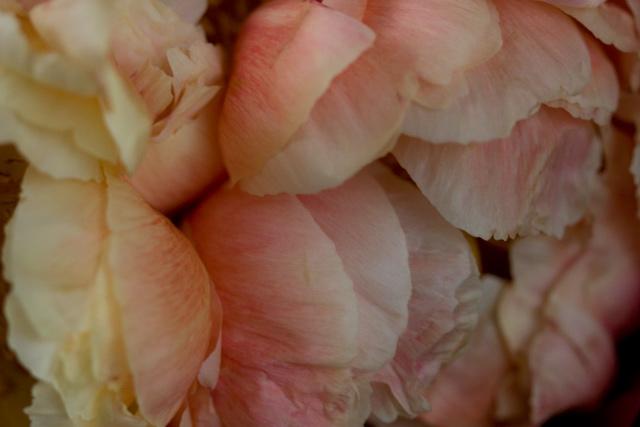 牡丹の花束_e0048332_2132555.jpg