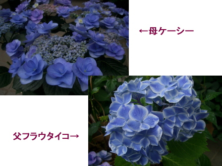 c0025140_19443234.jpg