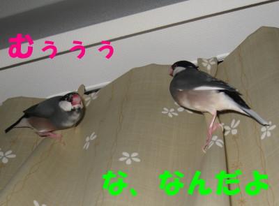 b0158061_21475142.jpg