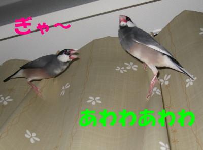 b0158061_21483015.jpg