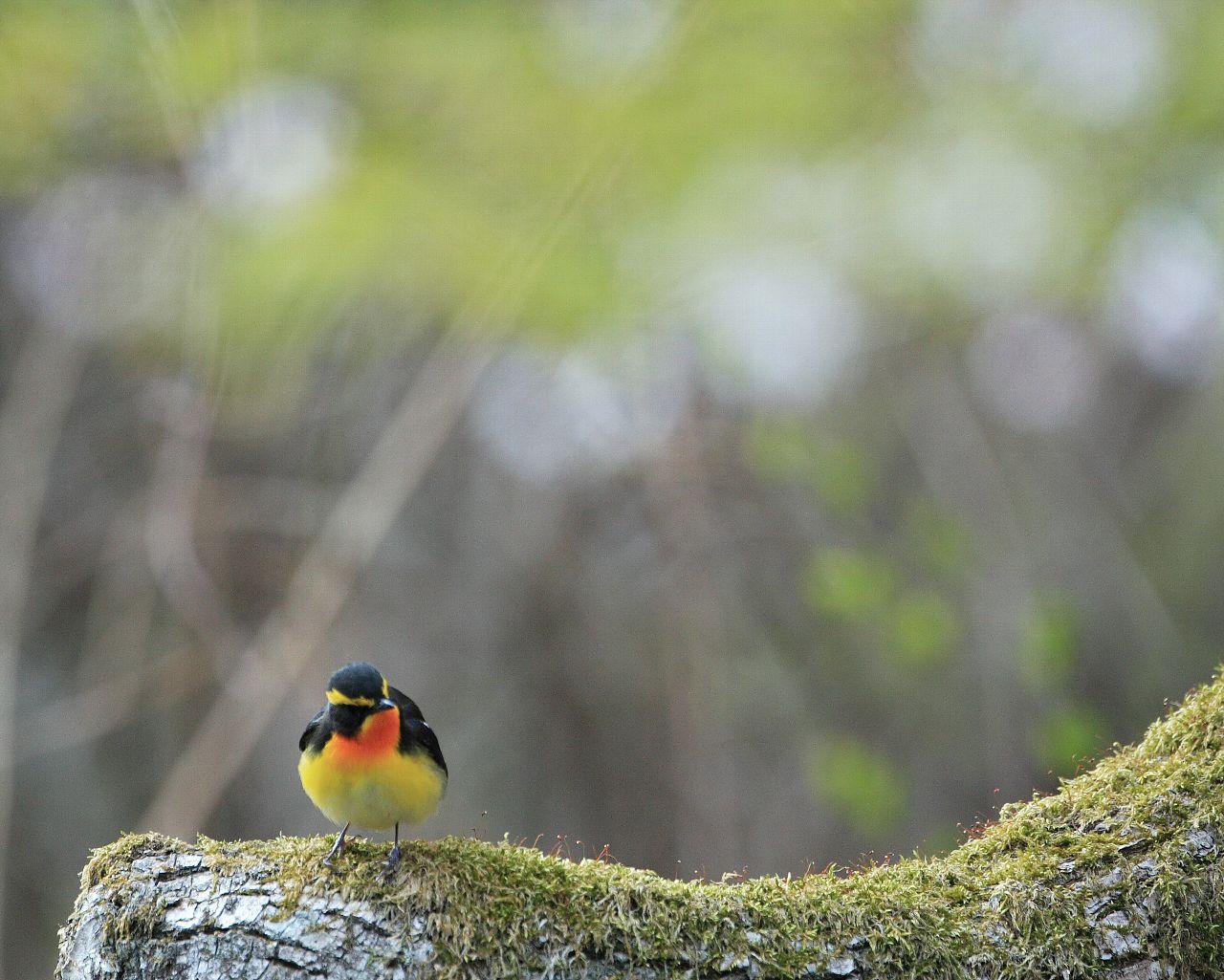 山の鳥も撮ってます。_f0105570_21331893.jpg