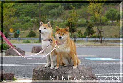 九州遠征3_a0053987_22331644.jpg
