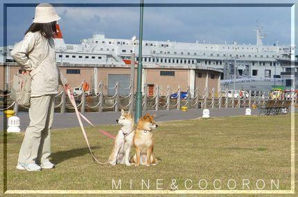 九州遠征3_a0053987_22375291.jpg