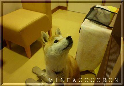 九州遠征3_a0053987_22431745.jpg