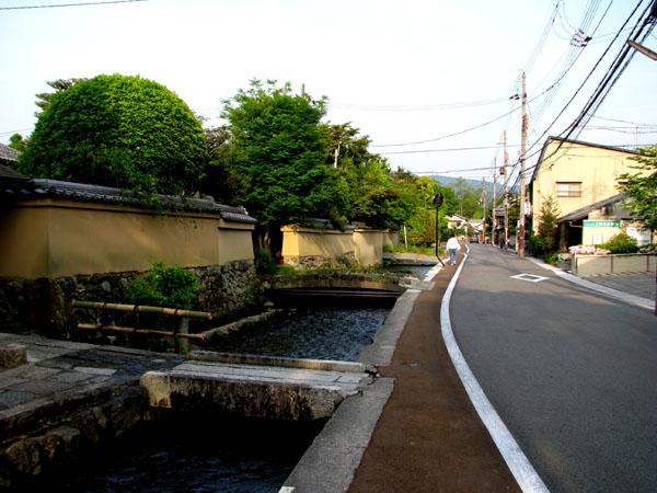 太田神社 カキツバタ満開_e0048413_2150058.jpg
