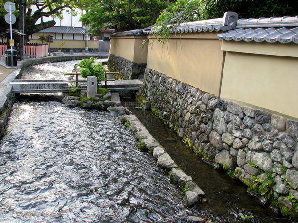 太田神社 カキツバタ満開_e0048413_21502762.jpg