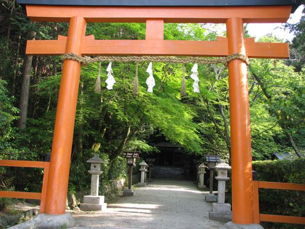 太田神社 カキツバタ満開_e0048413_21511272.jpg