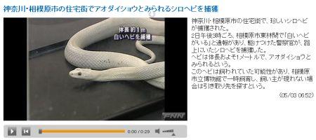 アルビノではない白いヘビ_c0025115_23215598.jpg
