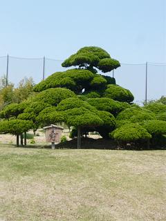 浜松で花だらけ_c0053520_0101737.jpg