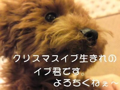 b0176428_16404027.jpg
