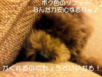 b0176428_16471430.jpg