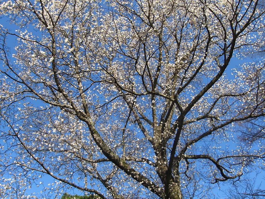 春遠野のもう一つのハナ・・・_d0001843_12332090.jpg