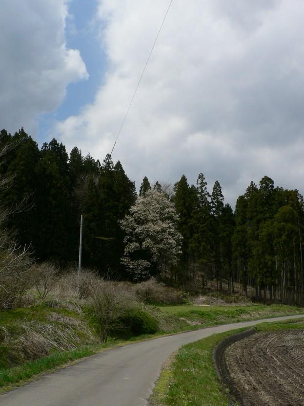 春遠野のもう一つのハナ・・・_d0001843_12345451.jpg