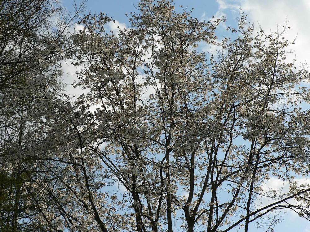 春遠野のもう一つのハナ・・・_d0001843_12353992.jpg