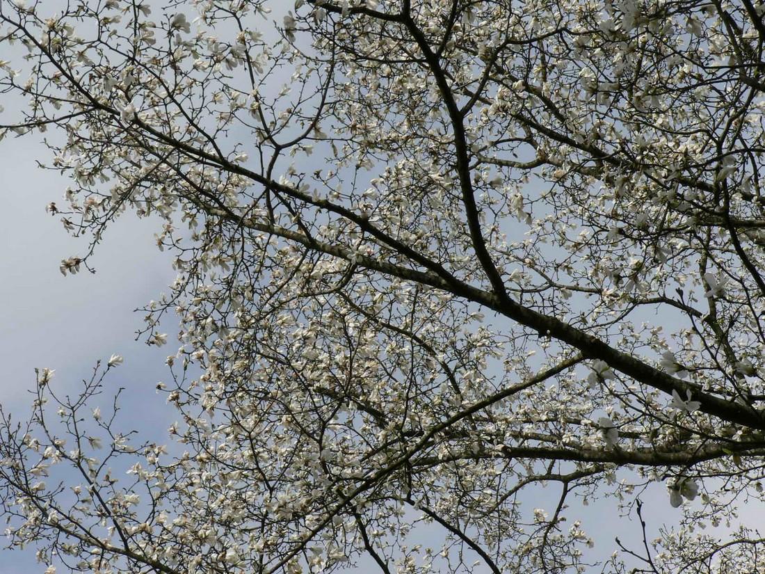 春遠野のもう一つのハナ・・・_d0001843_12382733.jpg
